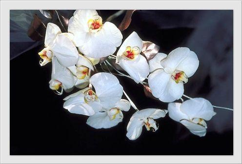 orchid e pour toute les mamans du monde centerblog. Black Bedroom Furniture Sets. Home Design Ideas